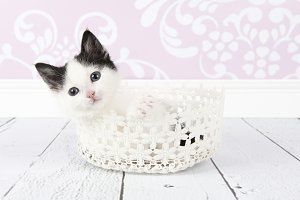 Black and white kitten in basket