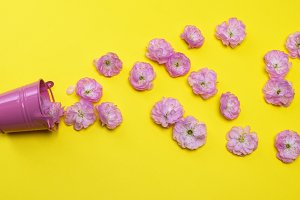 scattered pink buds
