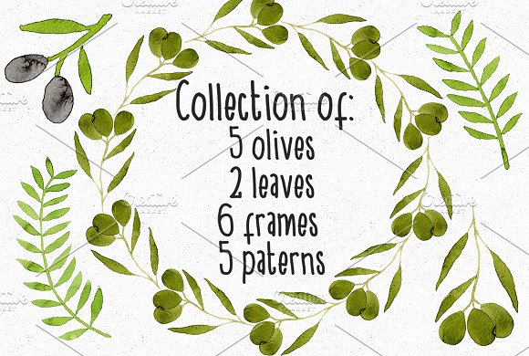 Collection Of Watercolor Olives