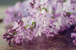 Purple Lilac, Purple Flower, Vintage