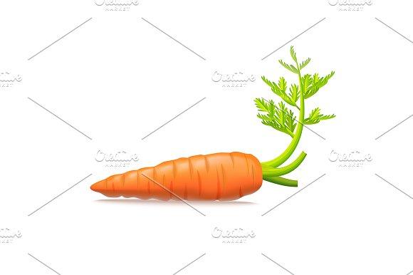 Realistic 3D Carrots Set Vector