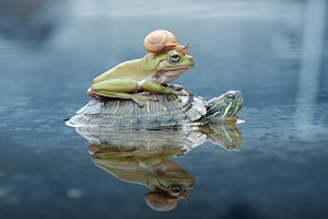 Turtles Carrying Frogs and Snails