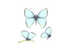 Hand Drawn Delicate Blue Butterflies