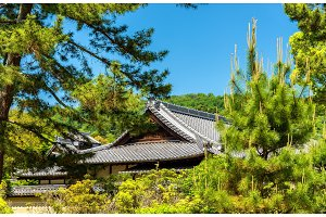 Roofs of a shinto shrine in Nara