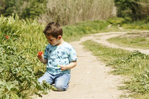 Little boy picking poppies