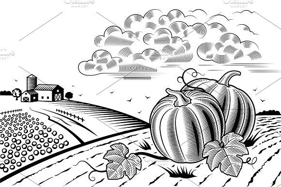 Pumpkin Harvest Landscape