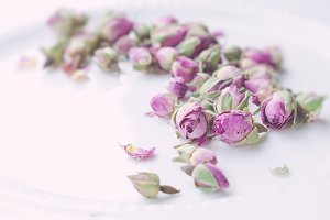 Dry Roses, White Background , Flower