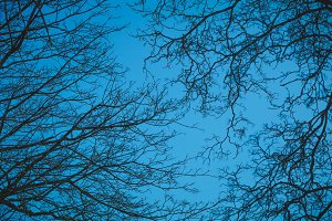Silhouettes of branches