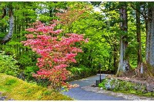 Blooming bush at Nikko heritage site
