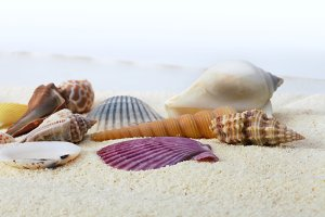 sea shells on sand background