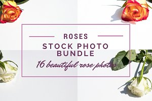 Roses Stockphoto Bundle
