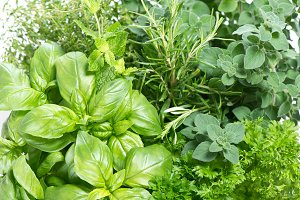 Fresh herbs. Food background