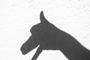 Shade dog from hands