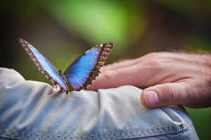 Couple holding a tropical butterly