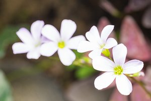 macro white flower.