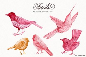 Watercolor Bird Illustrations