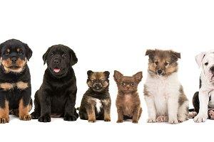 Ten breeds of puppies