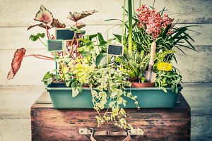 Plants in pots with garden tools