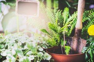 Fern plant seedling and shovel