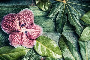 Orchid flowers on tropical leaves