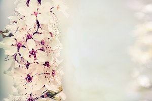 Floral layout with cherry blossom