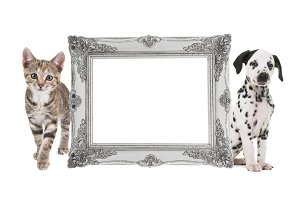 Cat and dog picture frame