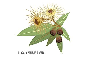Eucalyptus flower poster with plant that can heal