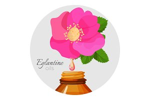 Eglantin oils promo poster with wild rose flower and bottle