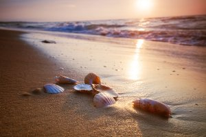 Sea shells lying on sand