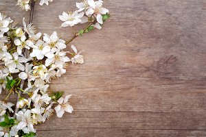Blossom cherry on wooden background.