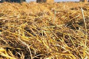 straw harvesting