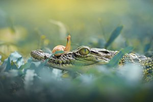 Snail with Crocodile