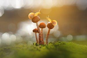 Snails On Mushrooms