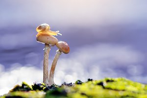 Snail On Mushrooms