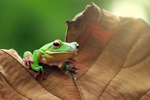 Frog On Leaves