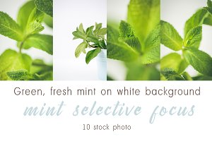 Green fresh mint on white background