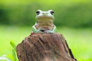 Frog On Wood