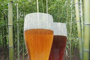 beer glass with bamboo canes