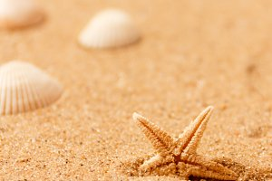 seashells on sand beach. Copy space.