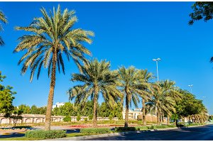 Street in Al Ain - Emirate of Abu Dhabi