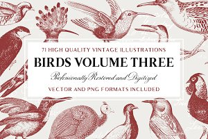 71 Engraved Bird Illustrations
