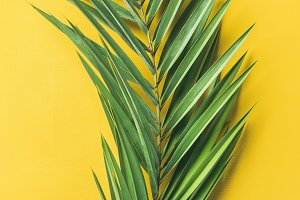 Green palm branch over bright yellow background, narrow composition