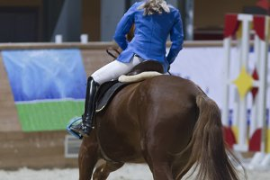 Rear view of equestrian rider running on stallion at the competition
