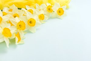 Daffodil spring flowers with yellow textile decoration on blue pastel background with copy space.