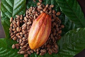 Bright orange color cacao pod