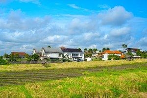 Villas in a rice fields. Bali island