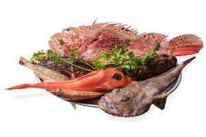 Rock fish tray isolated