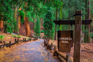 Congress Trail sign in Sequoia National Park