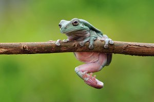 Frog On The Branch