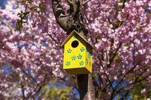 yellow birdhouse on tree branch with spring flowers